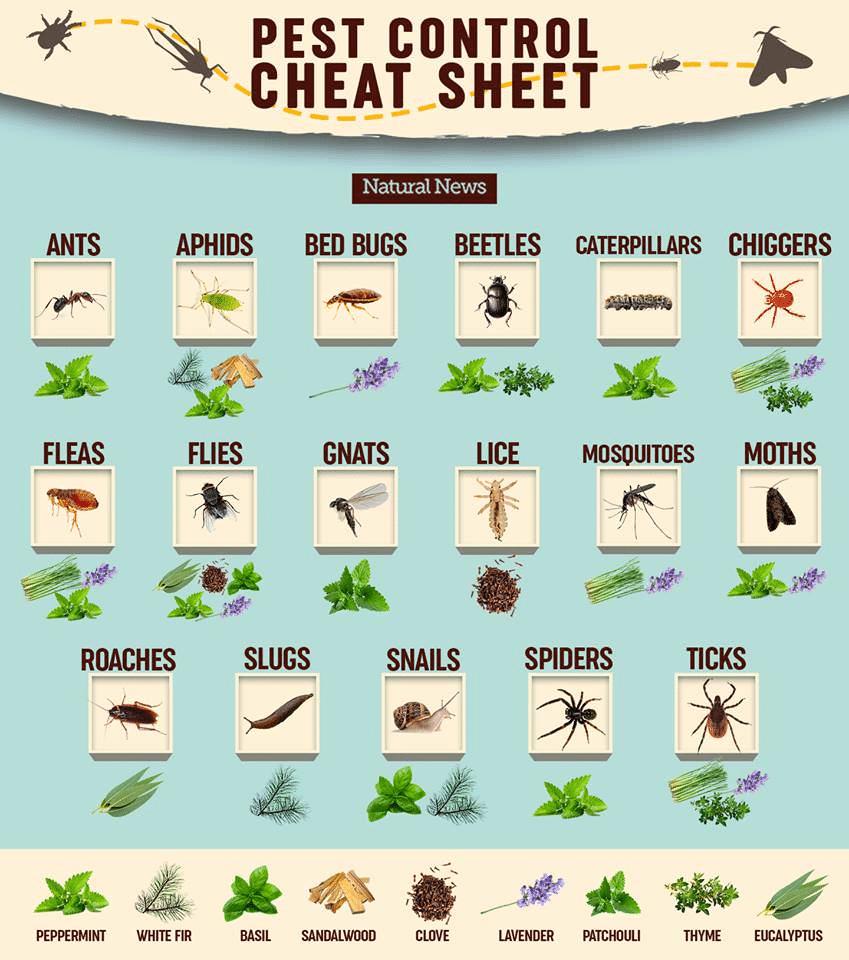 Pest Control Cheat Sheet